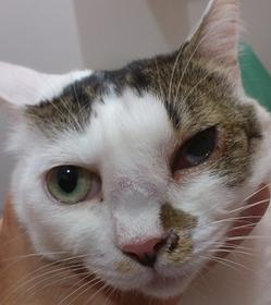 猫の鼻腔内腫瘍